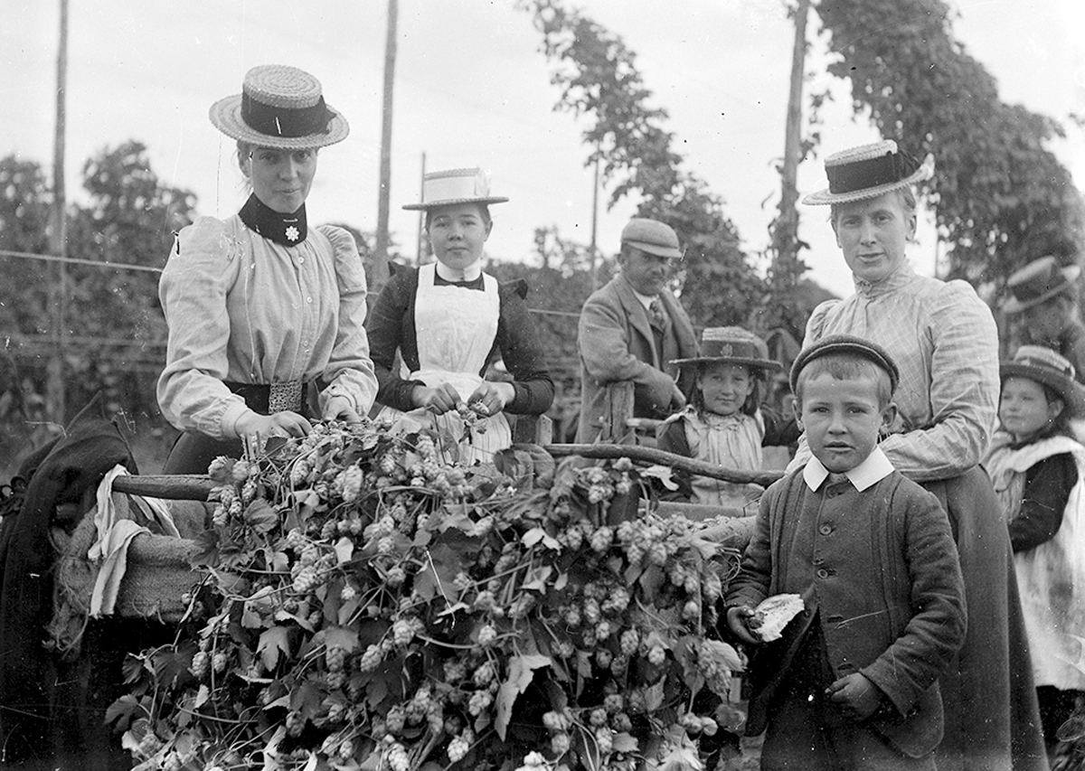 hop picking in kent essay A bumper crop (1933) great footage of families picking hops in the annual harvest in kent british pathé hop stringing (1969) hop stringing and banding contest in kent.